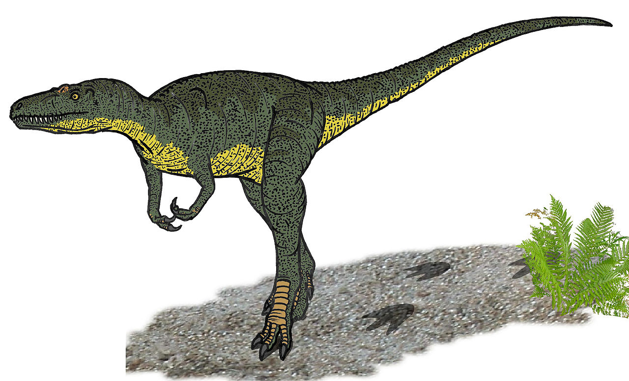 Nanotyrannus, restaurare. Autor Conty, Wikipedia.